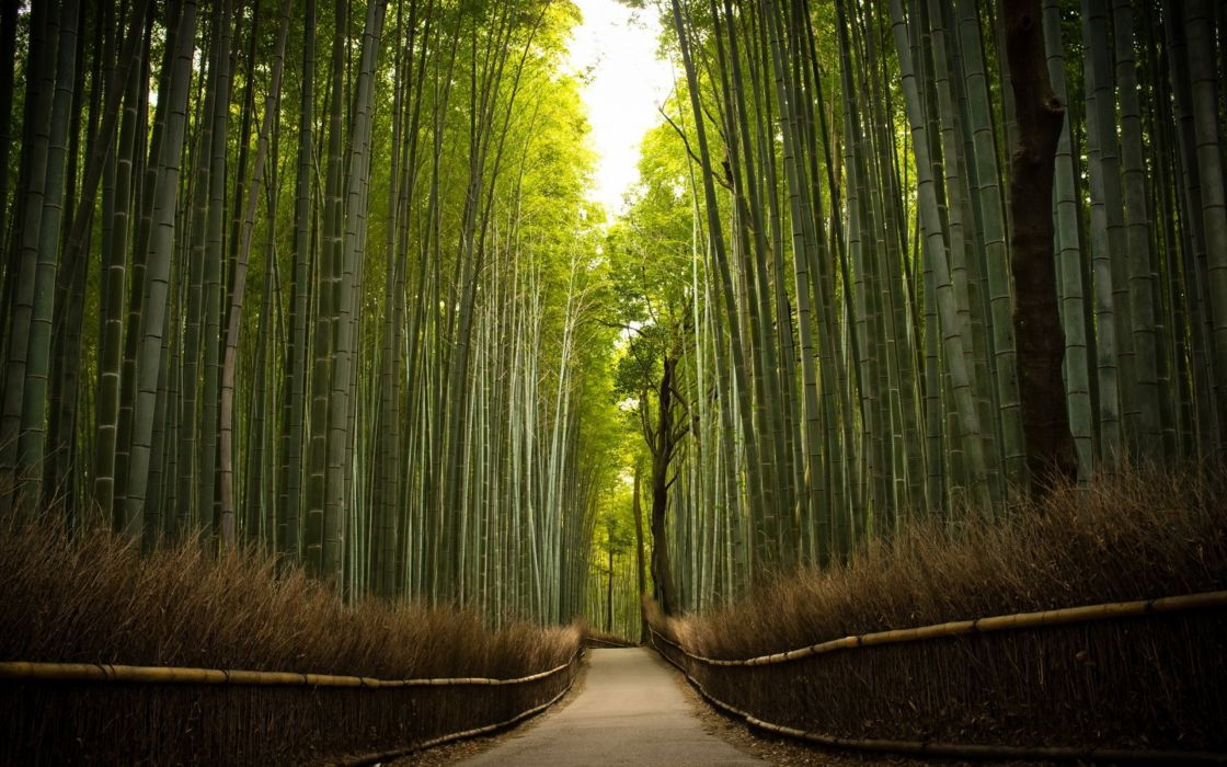 landscape nature tree forest woods path bamboo wallpaper