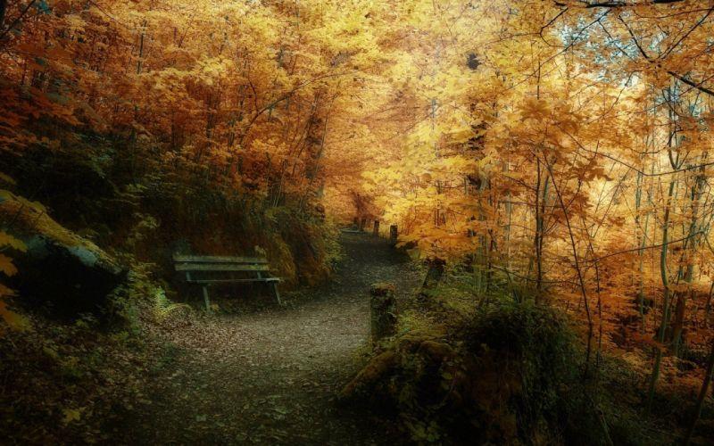 landscape nature tree forest woods path autumn wallpaper