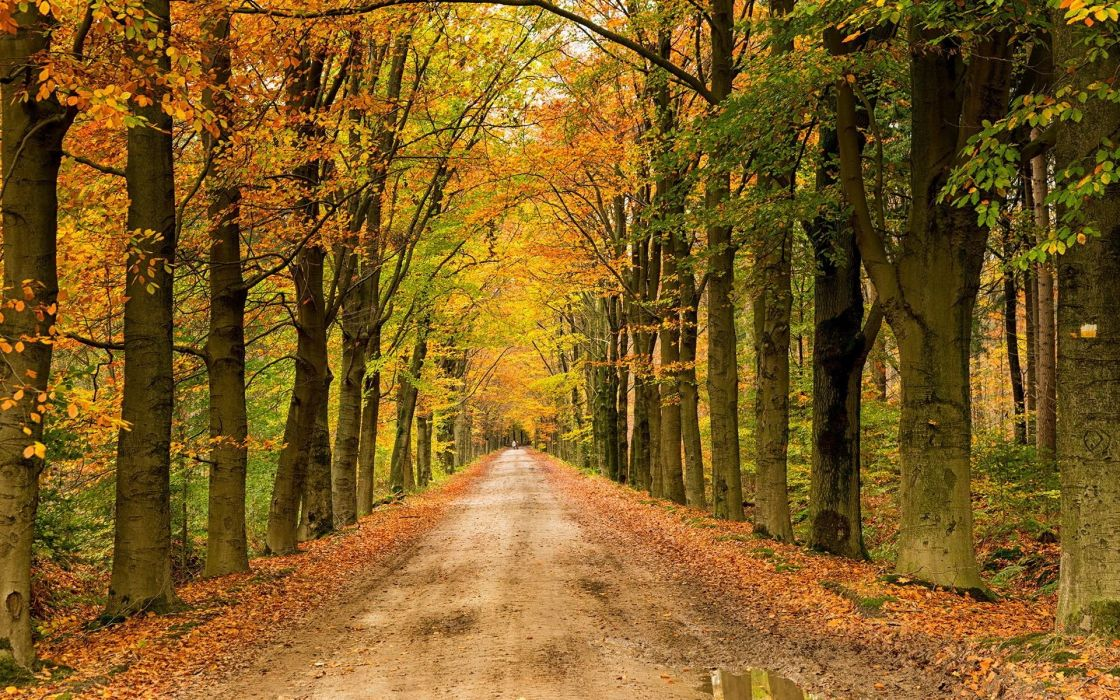 Path Landscapes Wallpapers Hd Hd Nature Wallpapers Road rh