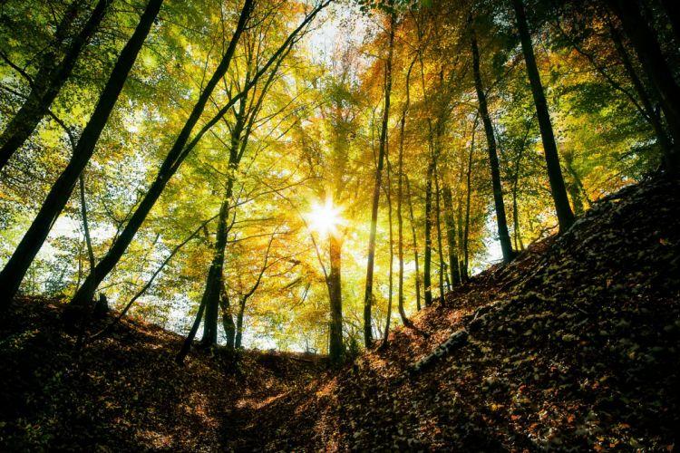 landscape nature tree forest woods autumn sun wallpaper