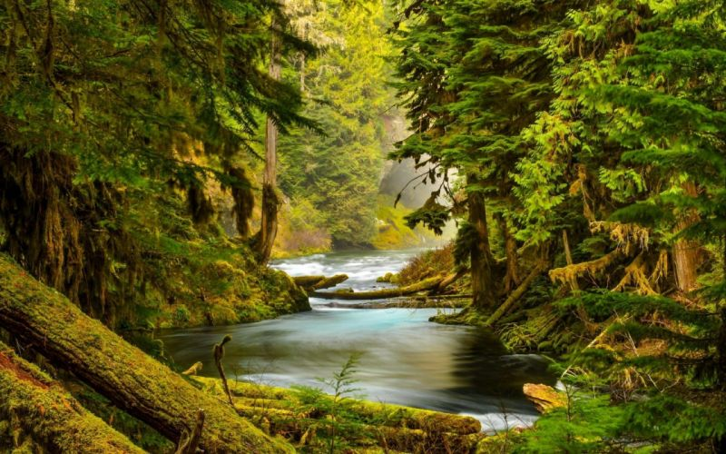 landscape nature tree forest woods river wallpaper
