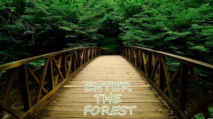 landscape nature tree forest woods bridge path wallpaper