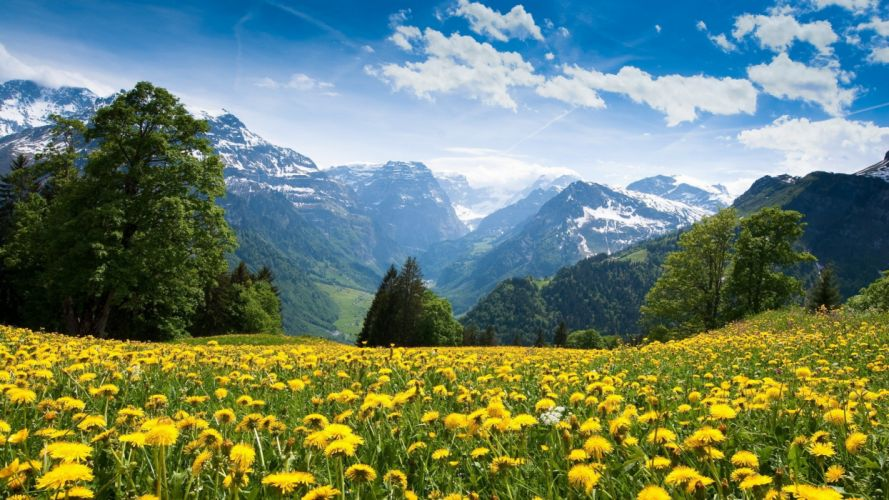 mountains landscape nature mountain spring meadow flowers wallpaper