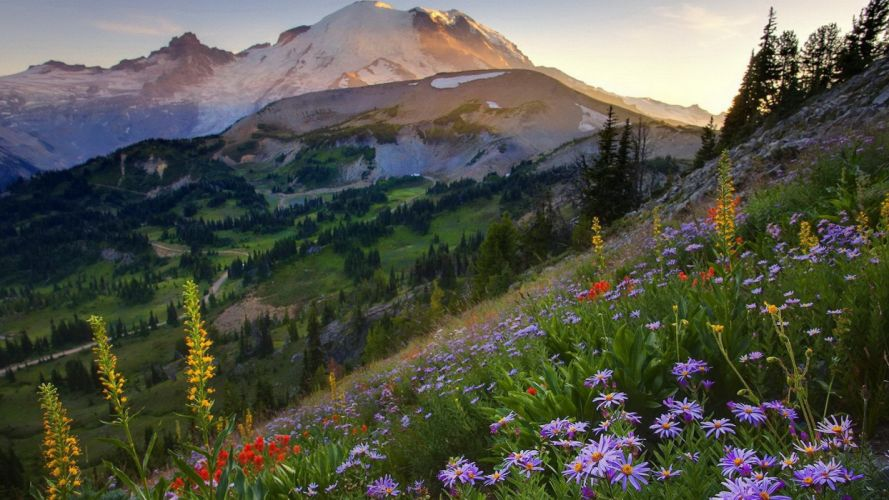 mountainside flowers wallpaper