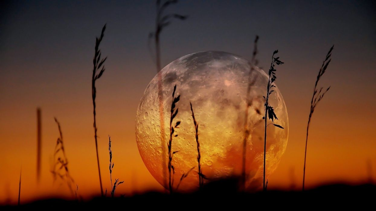 moon zoom landscapes plants sunset nature earth wallpaper