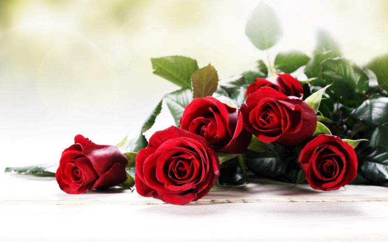 roses red flowers love romance emotions 4you bouquet spring wallpaper