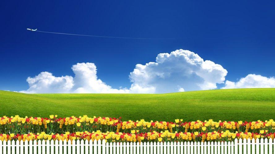 flowers fields sky wallpaper
