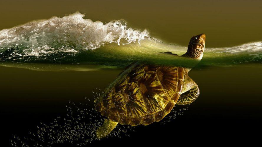 turtle ocean wallpaper