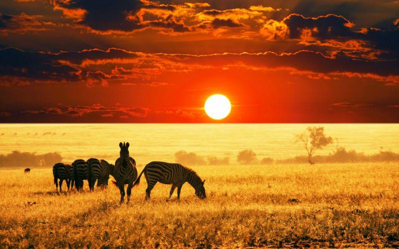 wilds animals sunset sunrise fields summer clouds nature earth landscapes africa Reserves Zebra sky wallpaper