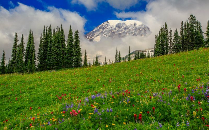 Nature grass flowers meadow slope trees pine spruce fir mountains clouds sky wallpaper