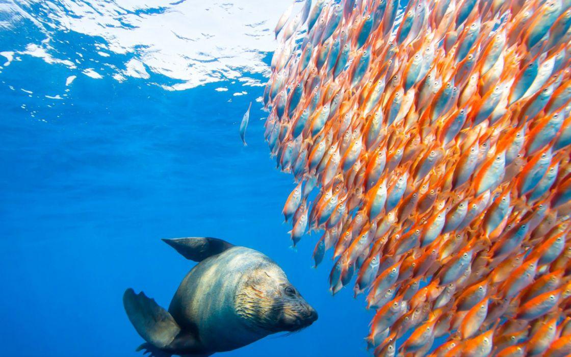underwater fish fishes ocean sea tropical seal seals wallpaper