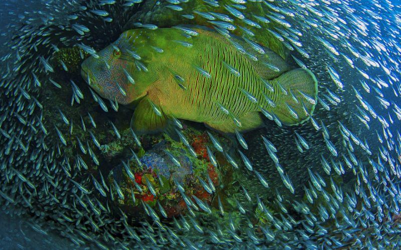 underwater fish fishes ocean sea tropical wallpaper
