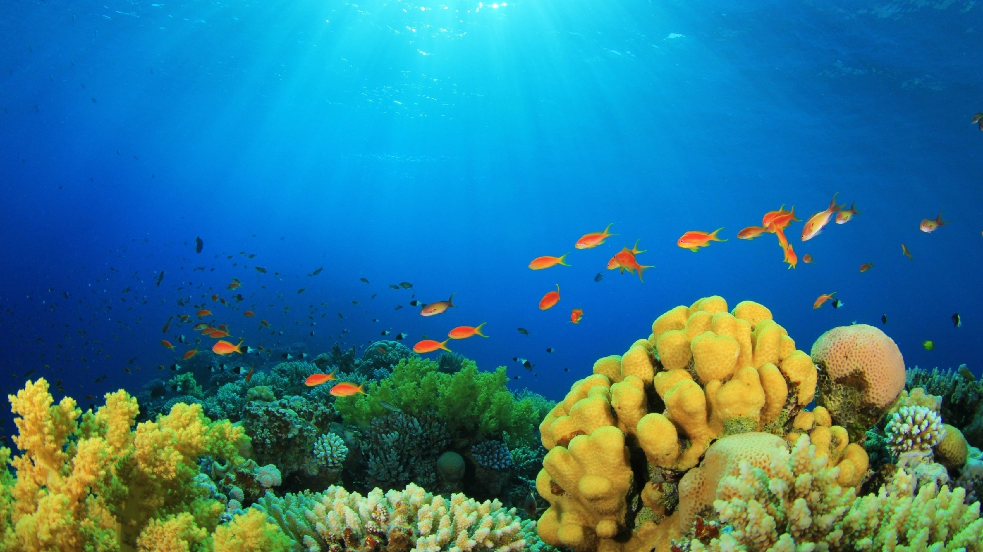 Hd Tropical Island Beach Paradise Wallpapers And Backgrounds: Underwater Fish Fishes Ocean Sea Tropical Reef Wallpaper
