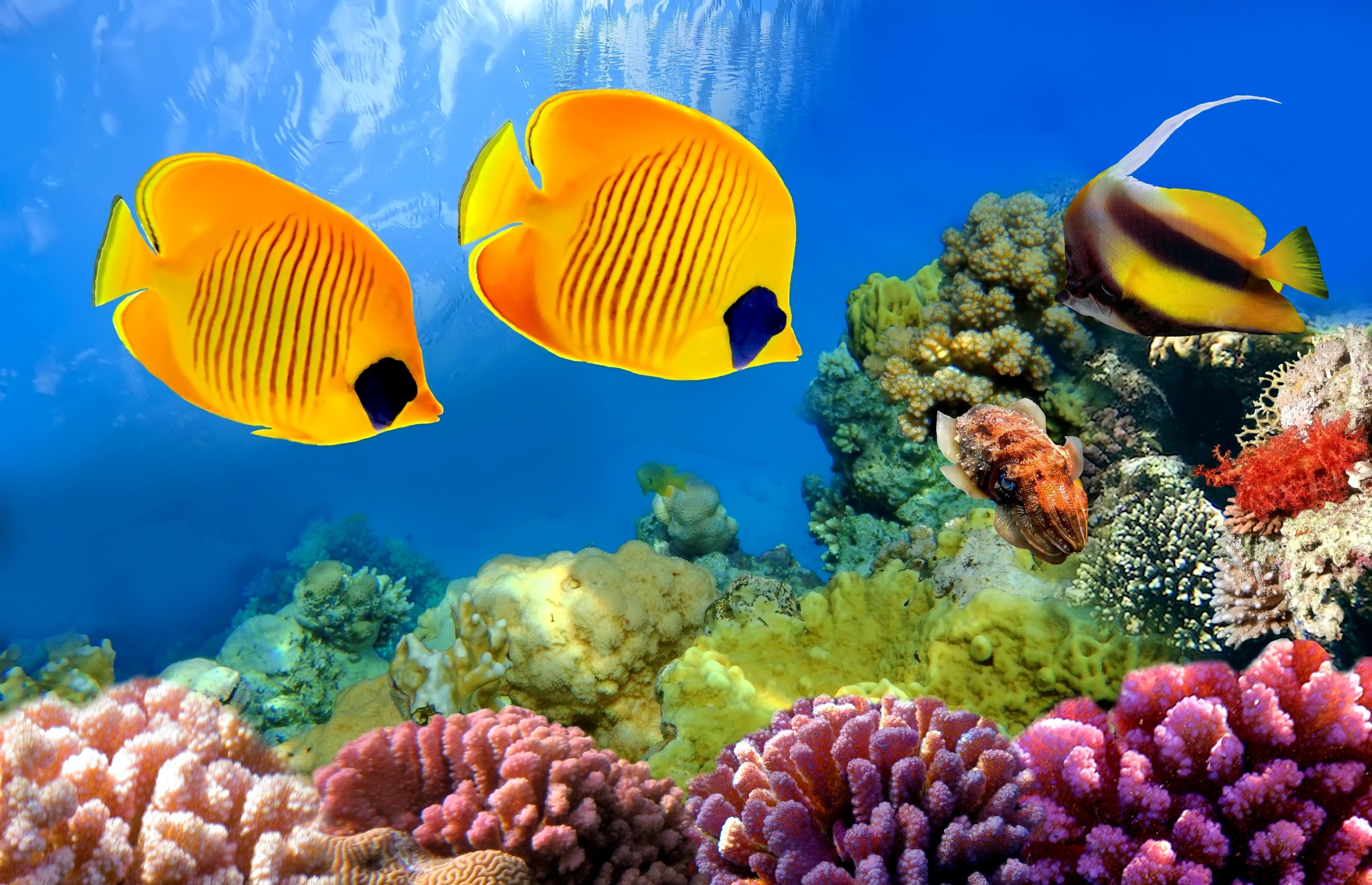 Underwater Fish Fishes Ocean Sea Tropical Reef Wallpaper