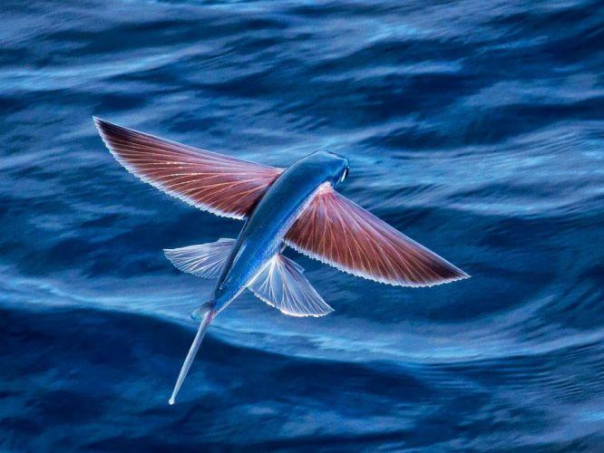 underwater fish fishes ocean sea tropical flight fly flying wallpaper
