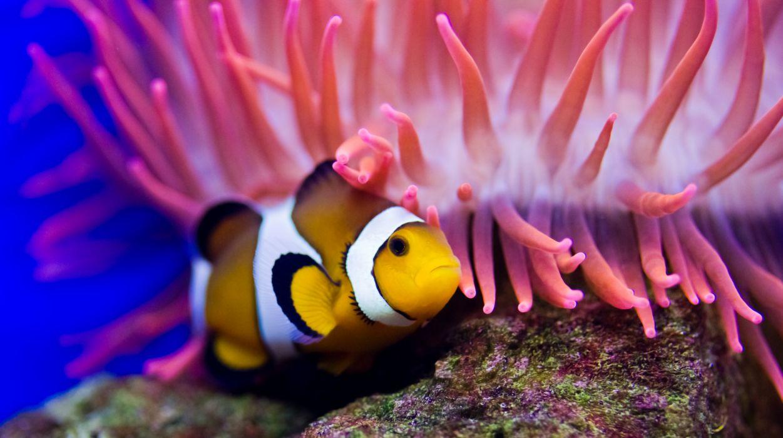 underwater fish fishes ocean sea tropical reef wallpaper