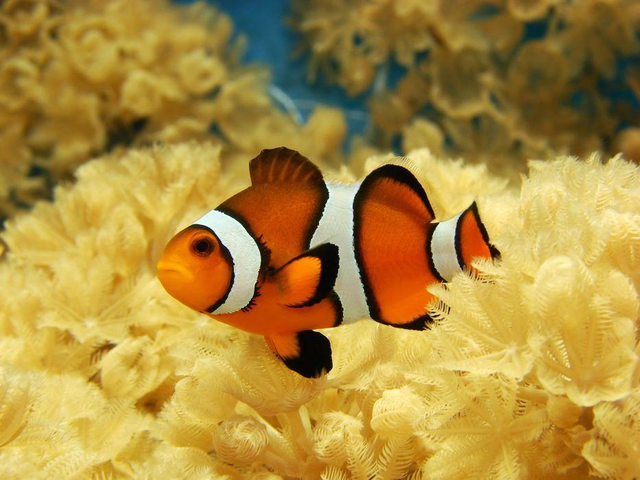underwater fish fishes tropical ocean sea wallpaper