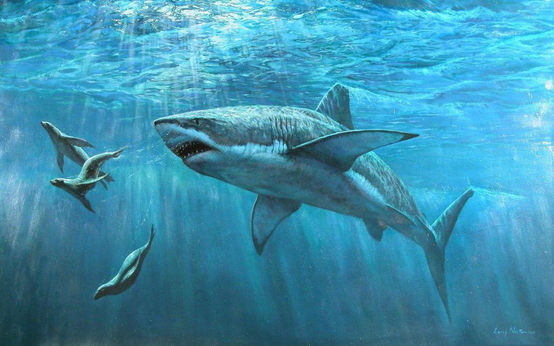 underwater fish fishes tropical ocean sea shark art artwork wallpaper