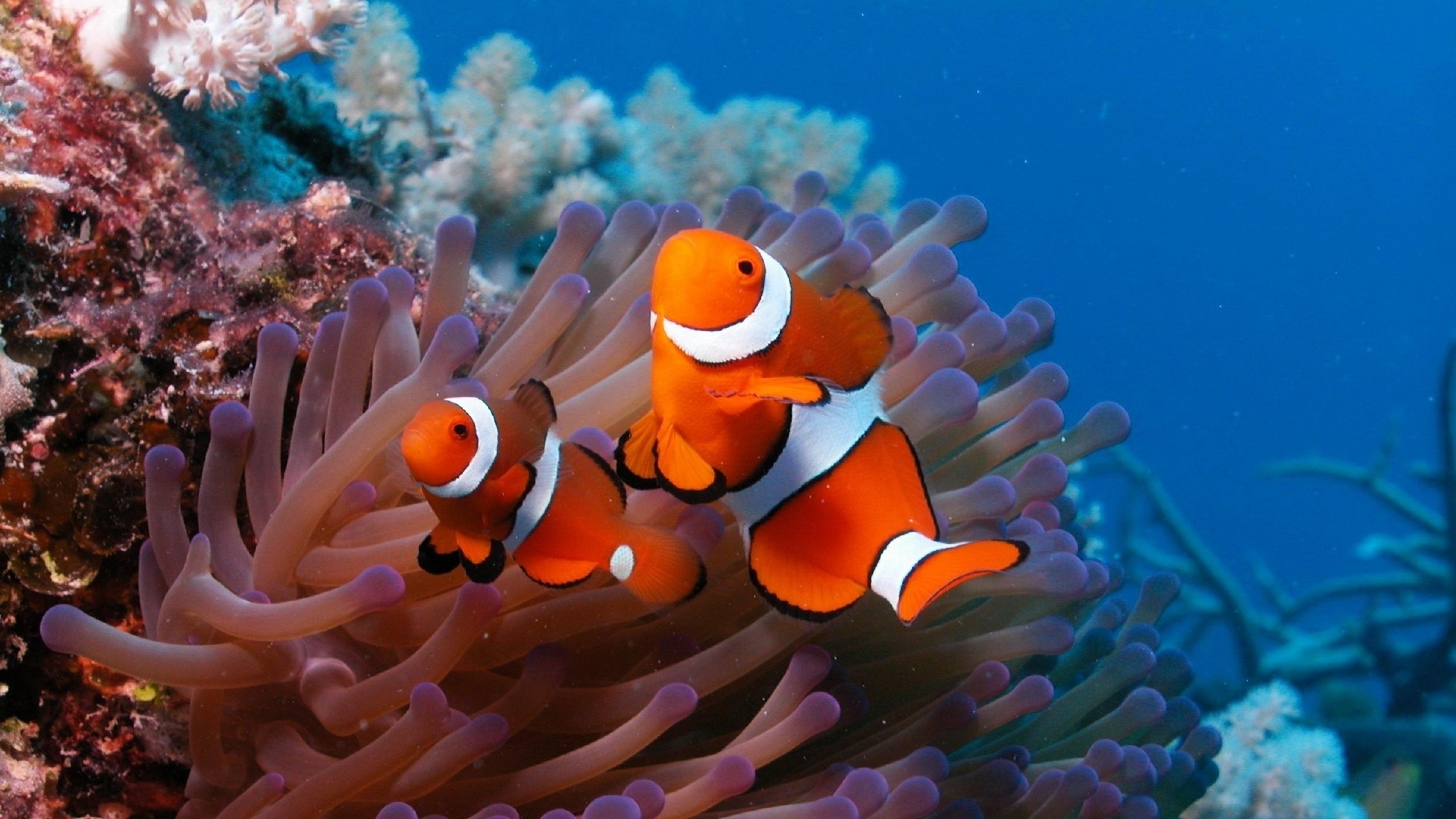 Underwater Tropical Fish Underwater fish fishes...