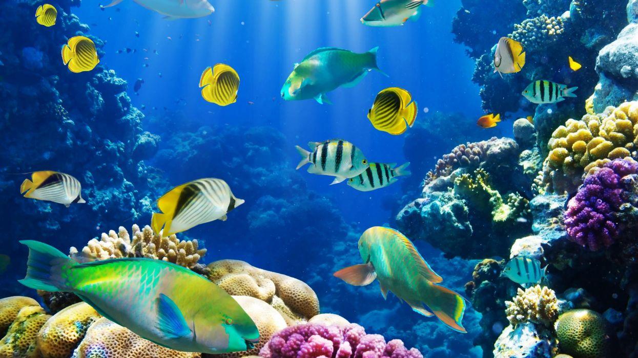 underwater fish fishes tropical ocean sea reef wallpaper