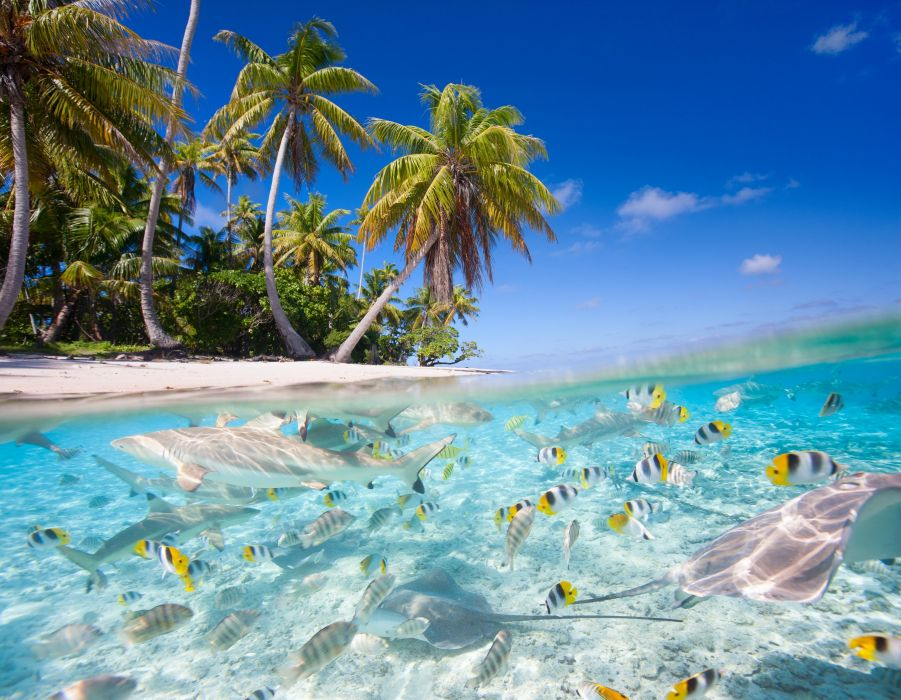 underwater fish fishes tropical ocean sea reef beah wallpaper