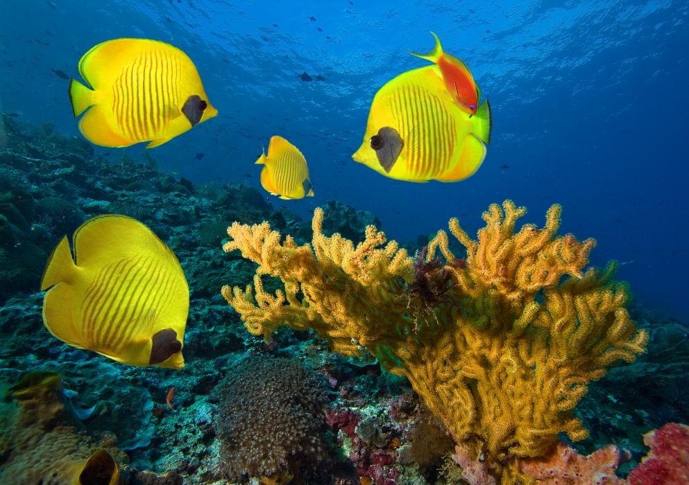 underwater fish fishes tropical ocean sea reef wallpaper
