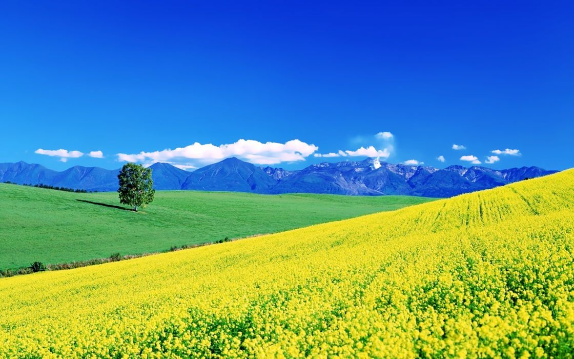 flowers yellow fields spring earth nature landscapes sunny sky mountains hills trees green grass beauty wallpaper