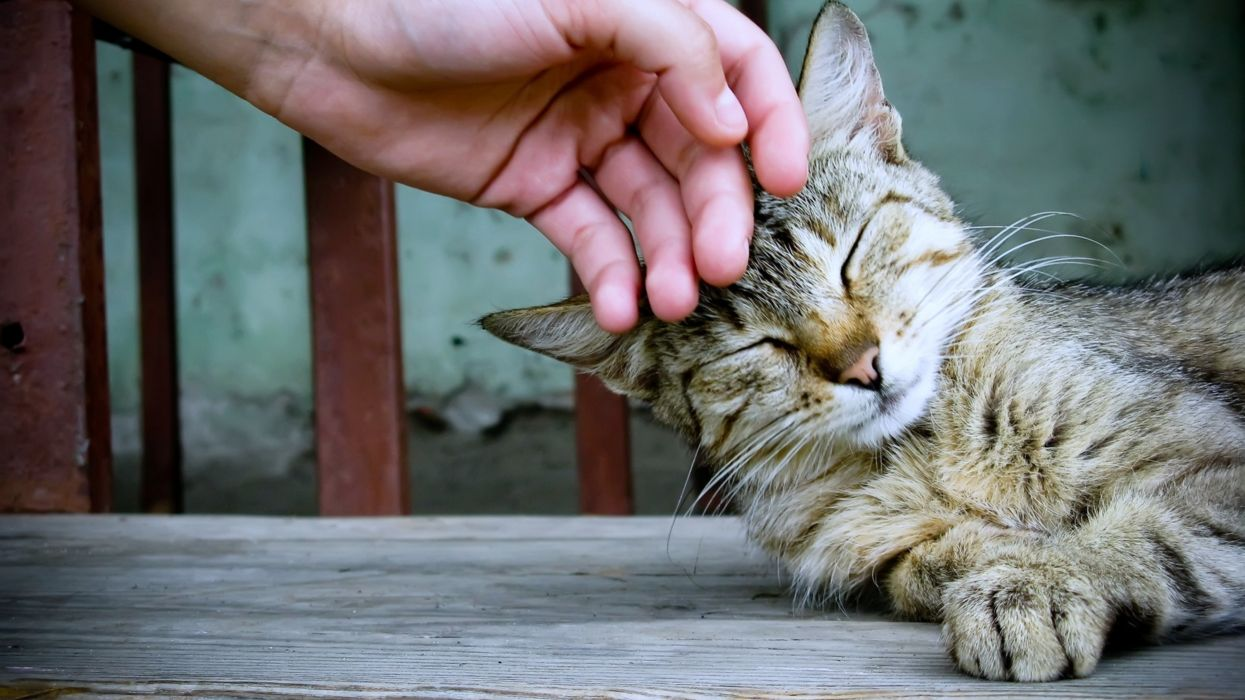 cats pets relax hand playing touch animals sleep wallpaper