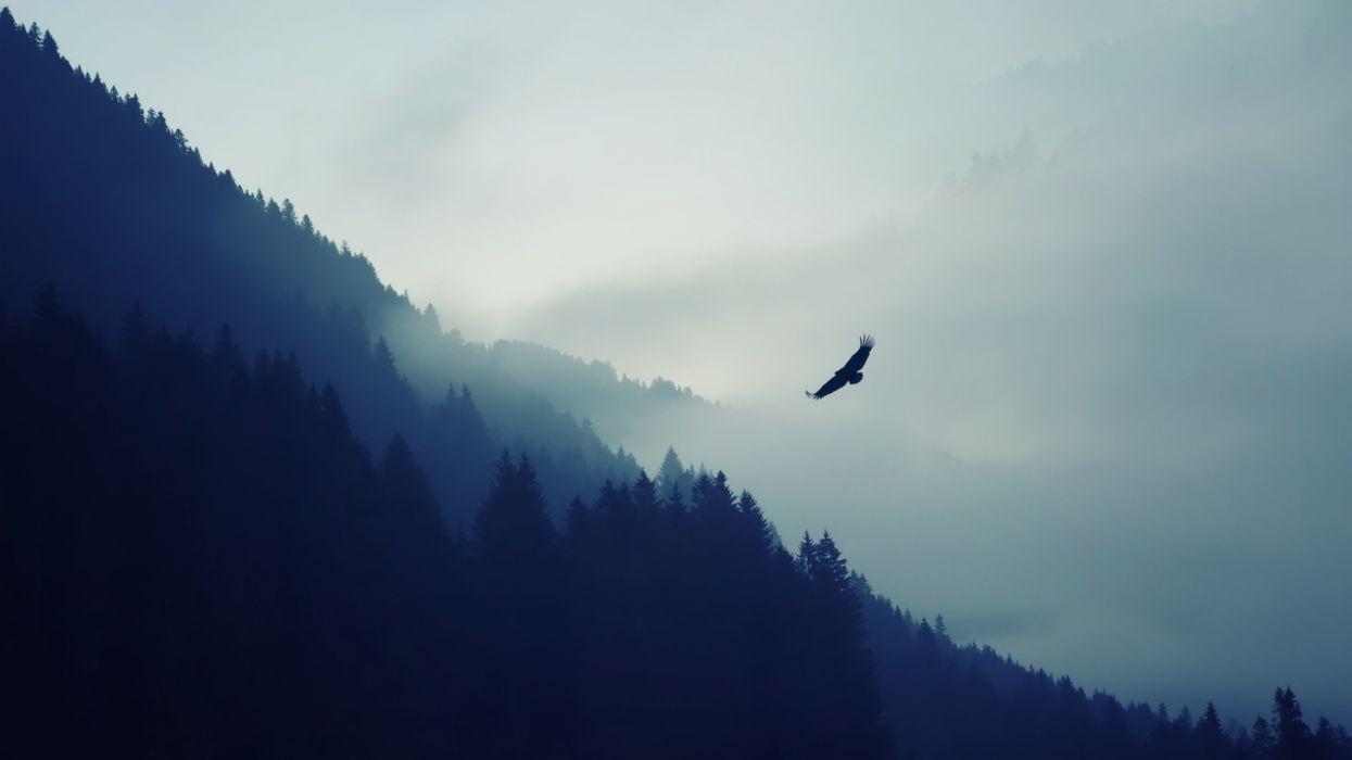 nature mountain falcon wallpaper