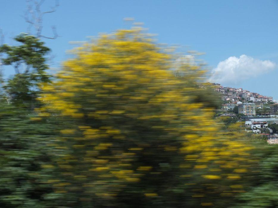 speed nature trees sky village wallpaper