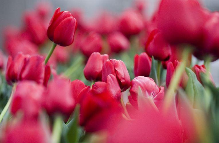 flower red beautiful nature wallpaper