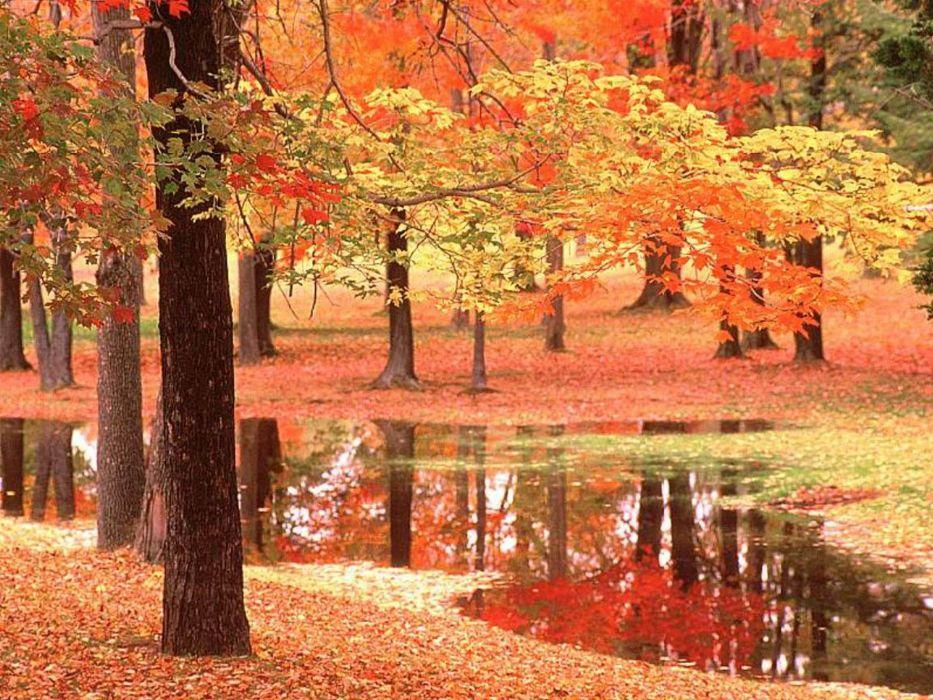 paisaje otoño rio bosque naturaleza wallpaper