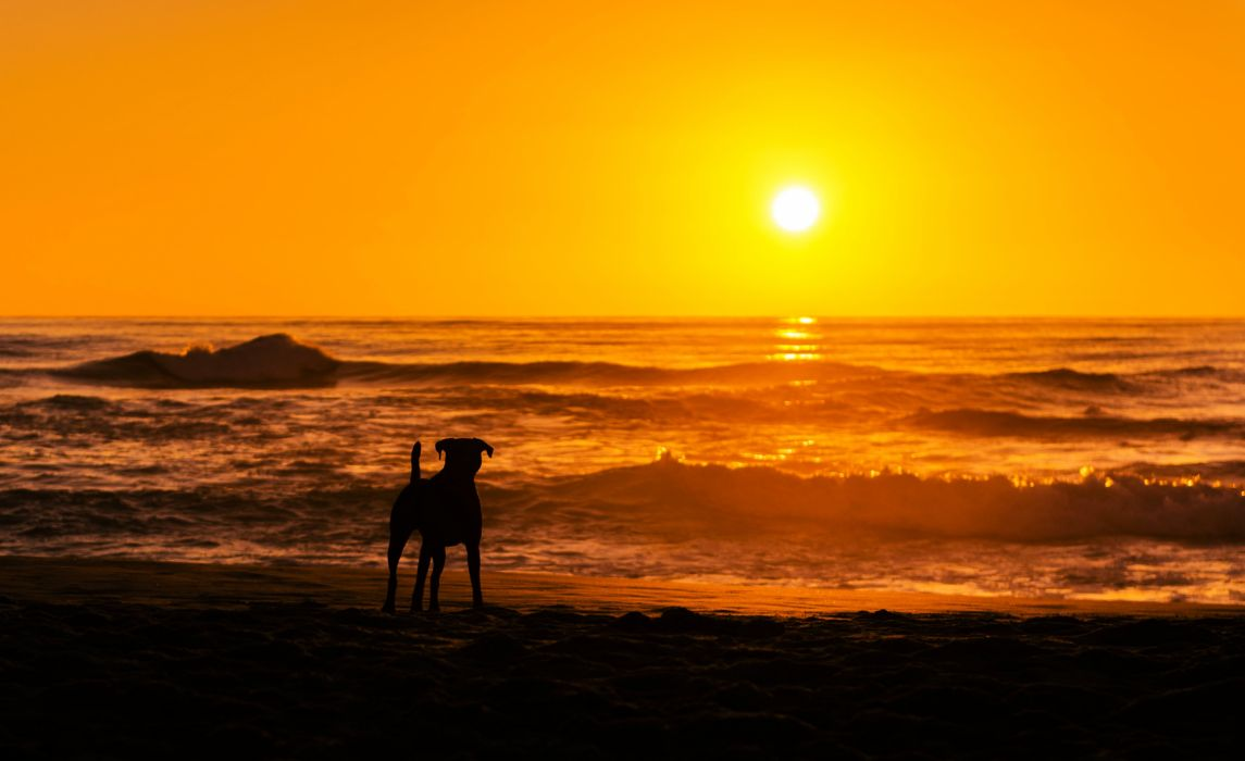 beaches sunset dog sea ocean orange waves beauty nature landscapes earth sun sky romantic wallpaper