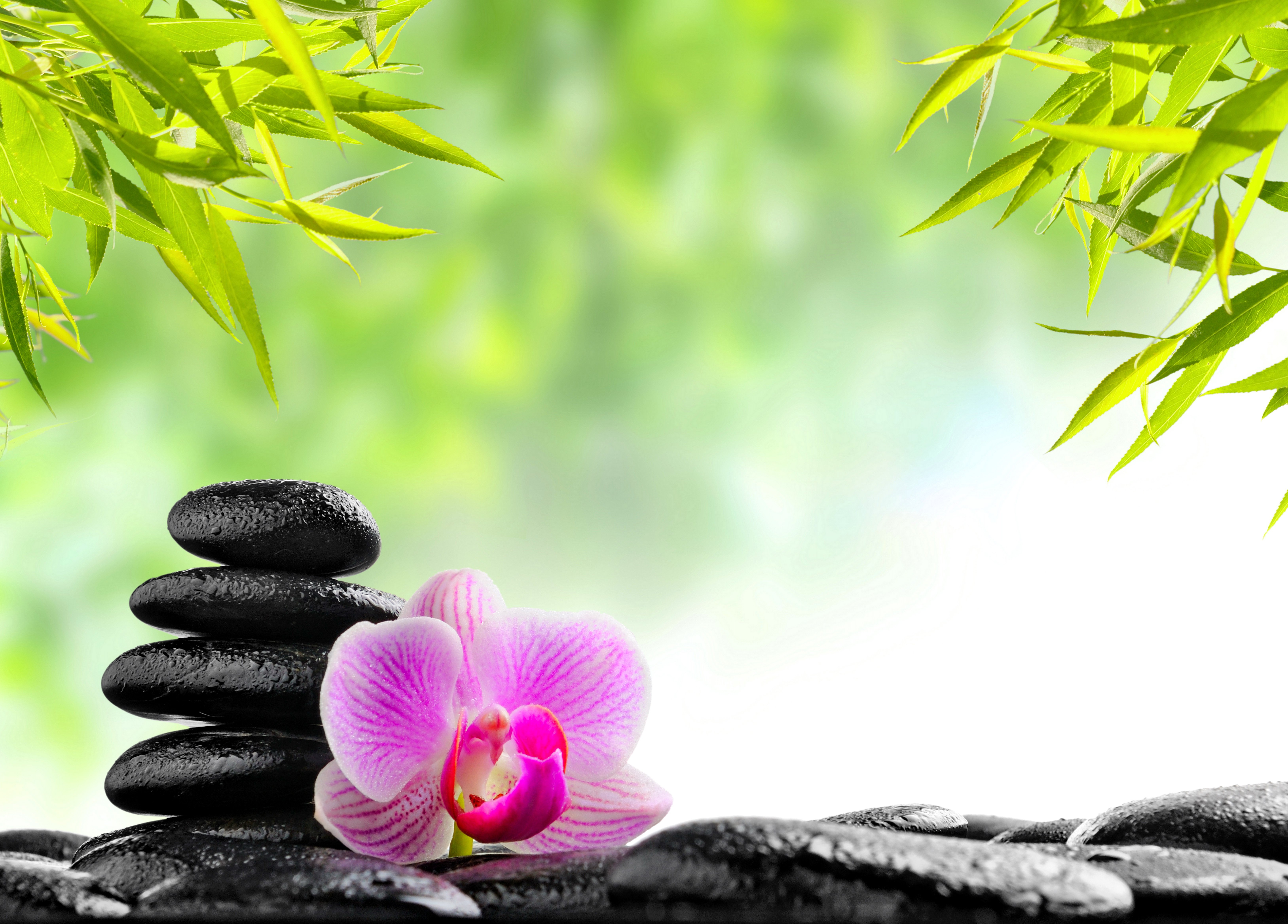 Lotus Flower Design Wall Paper : Zen mood bokeh garden buddhism religion wallpaper