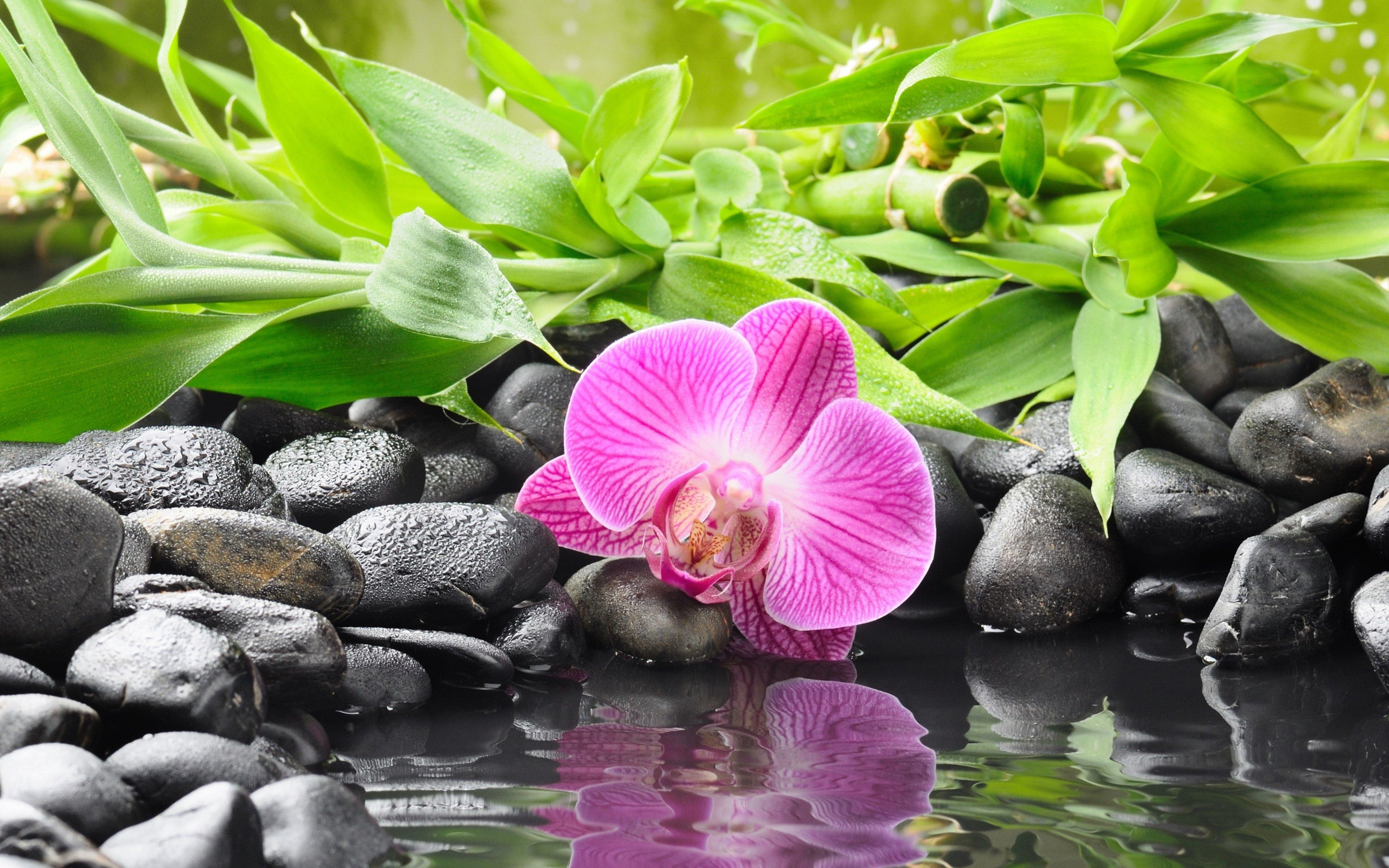 Zen Mood Bokeh Garden Buddhism Religion Wallpaper 3840x2400 664882 Wallpaperup