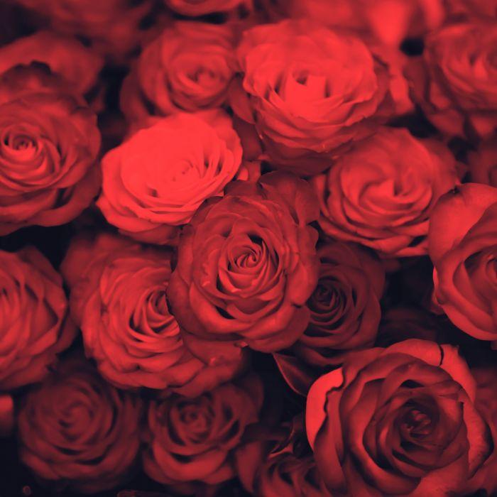 flower water nature beautiful re roses wallpaper