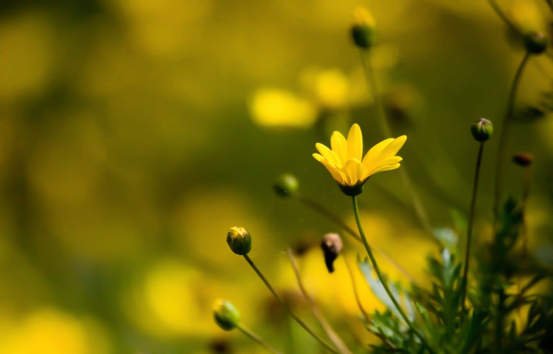 flower water nature beautiful yellow wallpaper