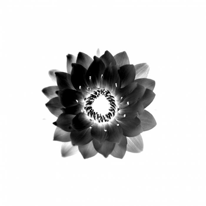 vector flower black white background wallpaper
