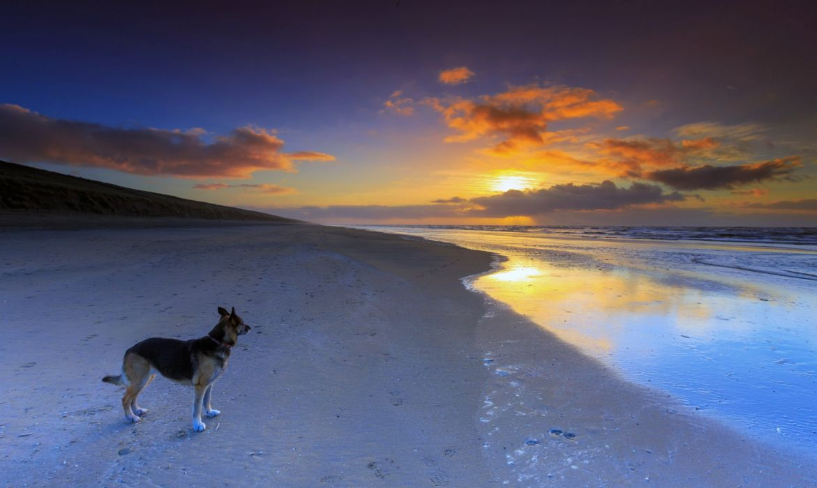 dog beaches sea ocean sunset sky clouds beauty romantic German Shepherd wallpaper