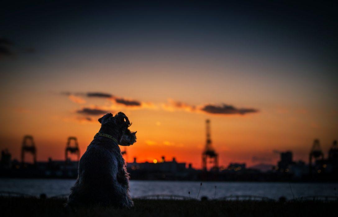 dogs sunset city calm quiet sky sea rivers nature landscapes wallpaper