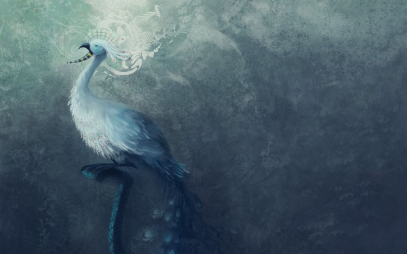 fantasy bird art artistic creature wallpaper