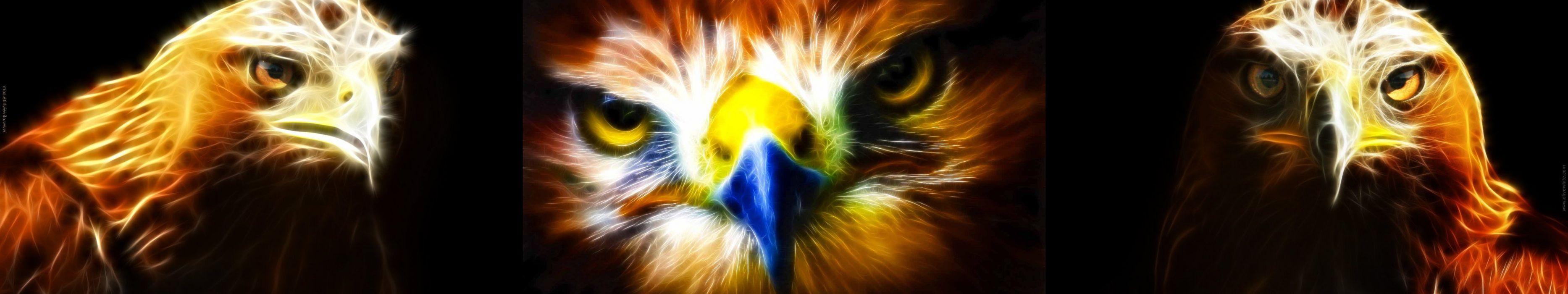 wallpaper triple multi multiple screen monitor animal light eagle wallpaper