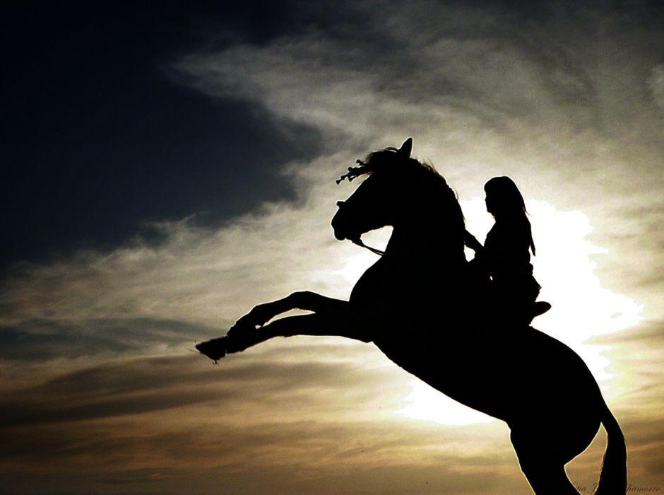 animal horse beautiful girl sunset wallpaper