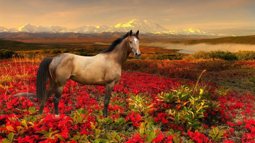 horse flower animal wallpaper