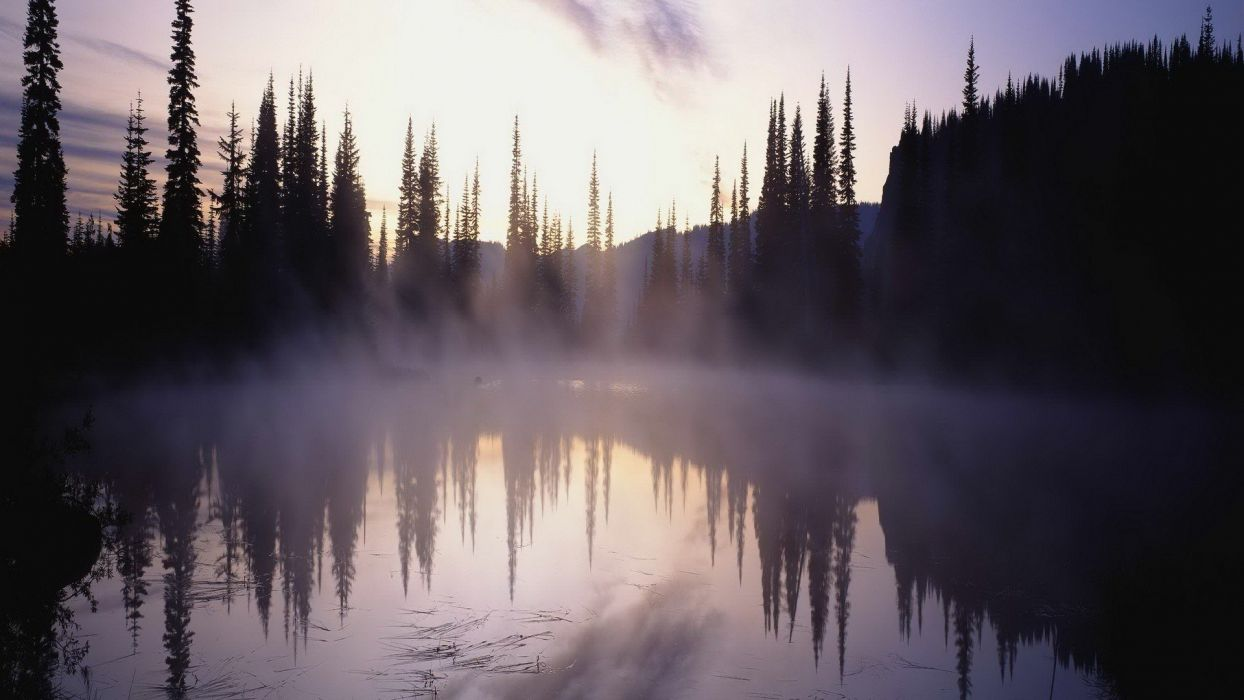 Nature Tree Fog Lake wallpaper