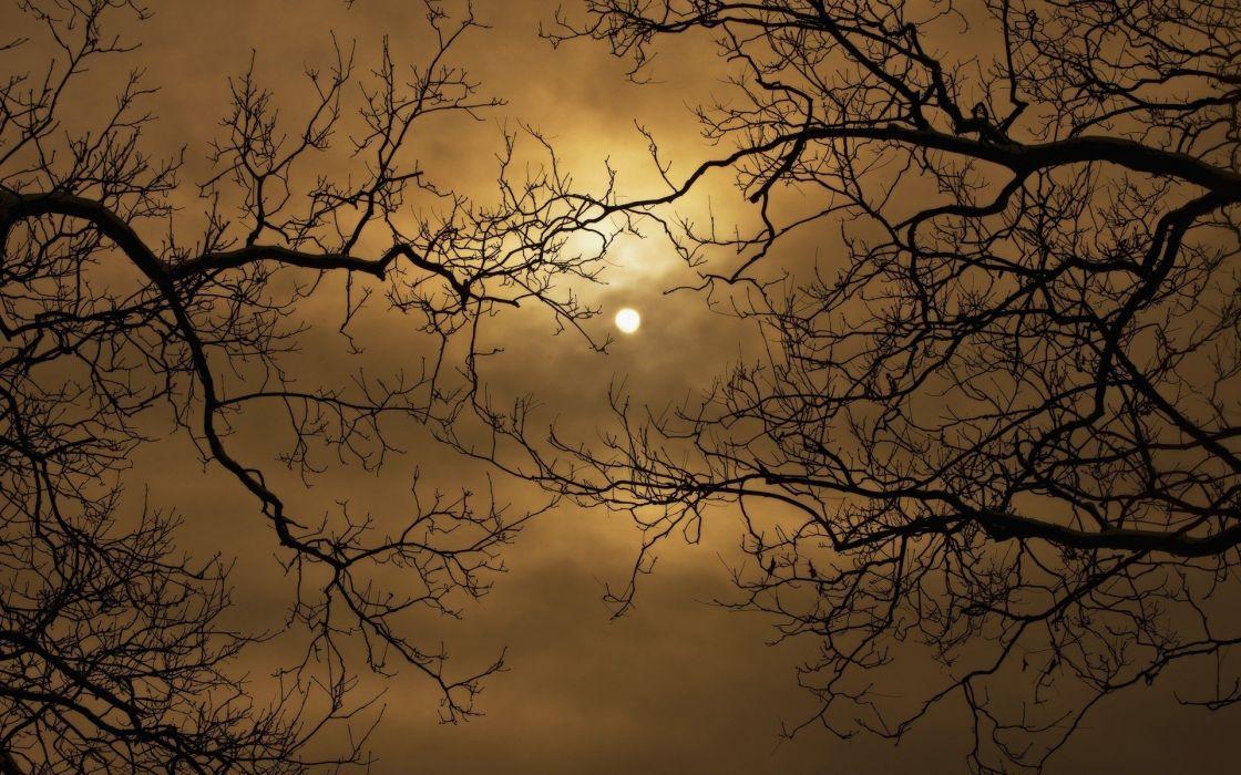 Nature Cloud Tree Sun Branch wallpaper