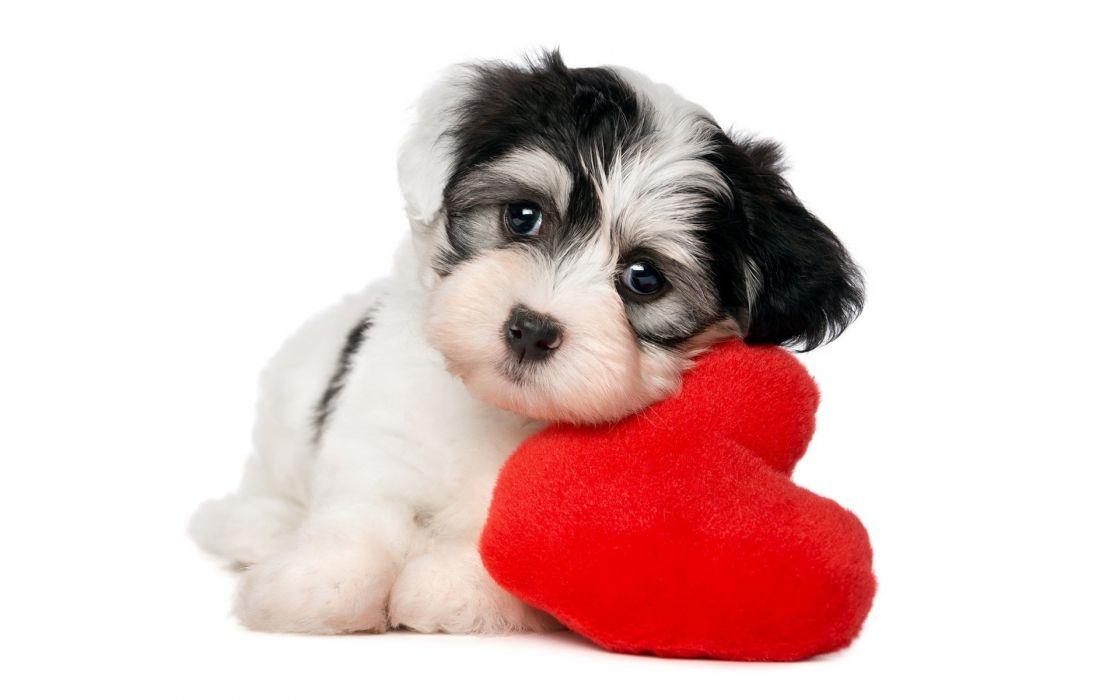 Animals Dog Heart wallpaper