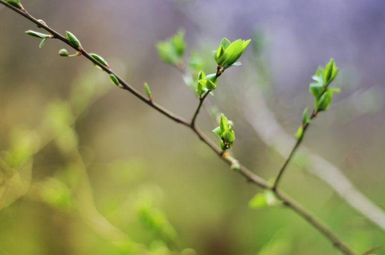 spring leaves tree macro D wallpaper