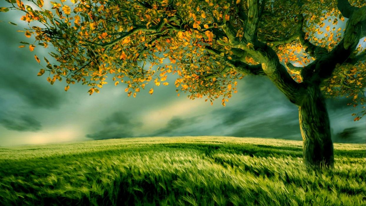 nature tree landscape art artwork artistic wallpaper