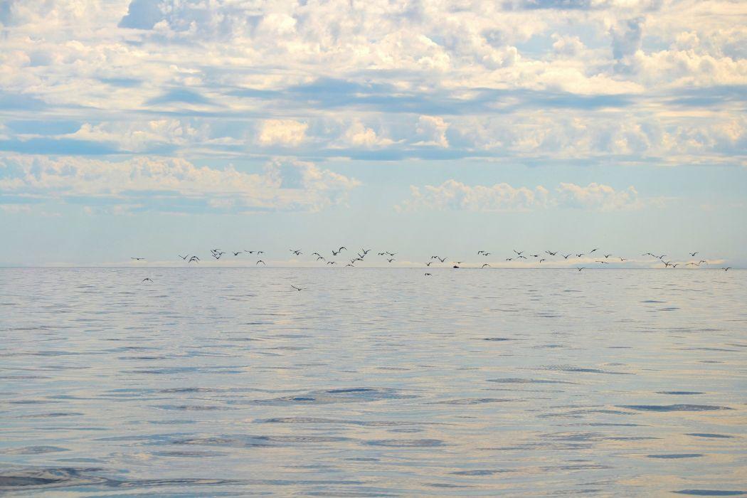 clouds birds sea horizon sky ocean flock wallpaper